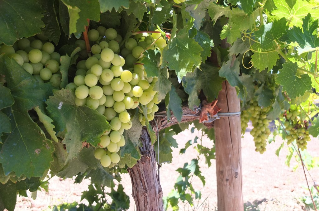 Weinstock Chardonnay